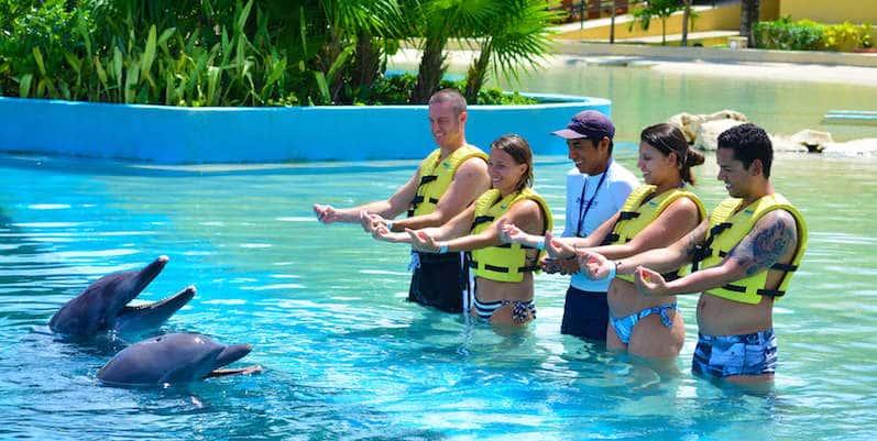 Atividade de nado com os golfinhos em Cancún