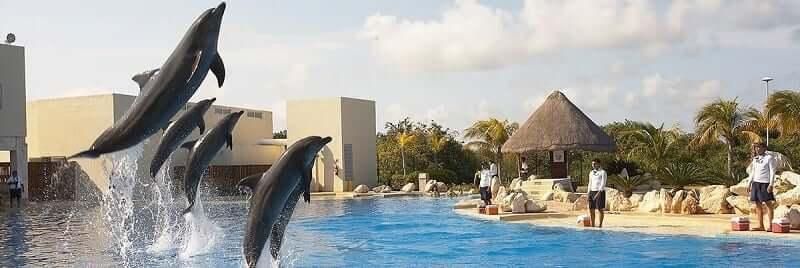 Diversão com Dolphinaris Cancún
