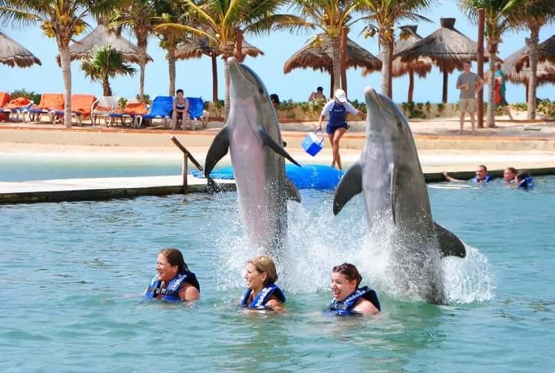 Nadar com golfinhos em Cancún