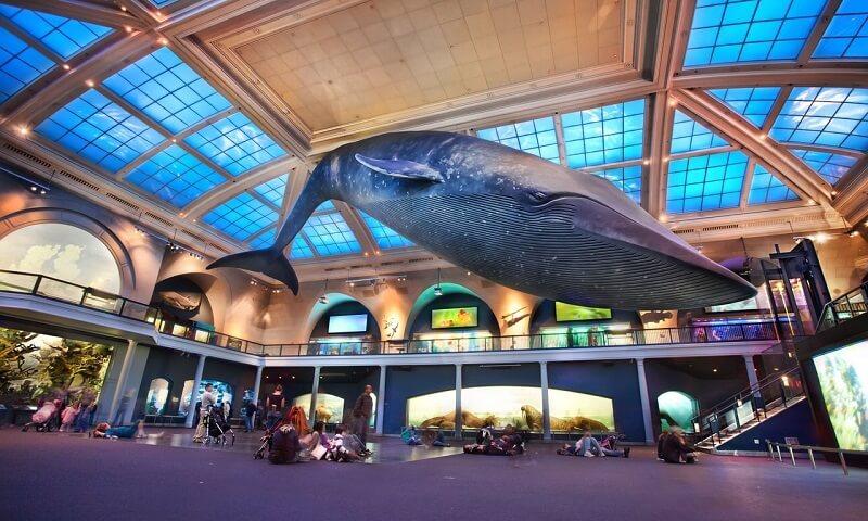 Museu de História Natural e Cultura Ambiental na Cidade do México