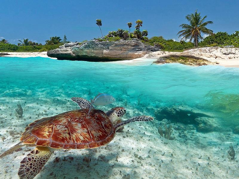 Playas más bellas de México: Playa Akumal en la Riviera Maya