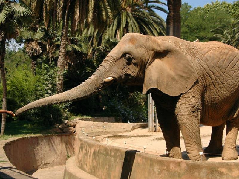 Animal en el Zoológico de Chapultepec en Ciudad de México