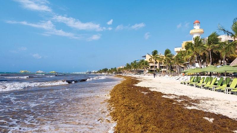 Sargazo en playa de Cancún